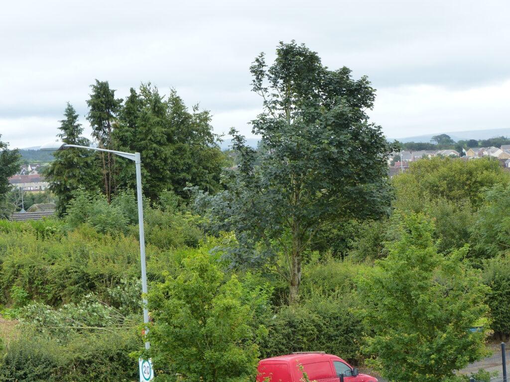 ONECarluke Community Growing & Learning Garden