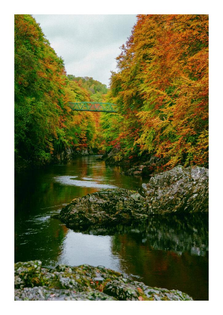 Evelyn Mcewan – Autumn Leaves Pitlochry