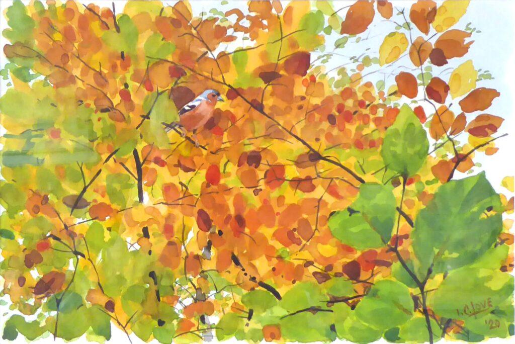 Evelyn Mcewan – LOVE Iain Autumn-Trees-and-Chaffinch@2x